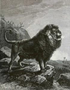 barbarylionb1898bw